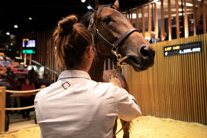 Un yearling vendu 1,6 million d'euros à Deauville